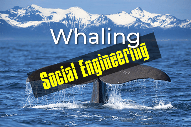 What Is a Whaling Attack
